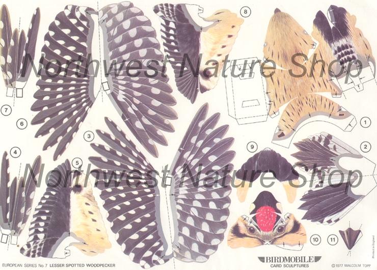birdmobile lesser spotted woodpecker 2