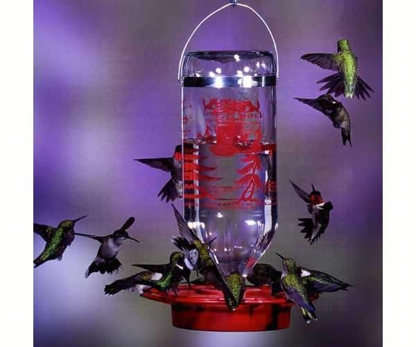 bees bird reviews hummingbirds humming feeders hummingbird on plus feeder best
