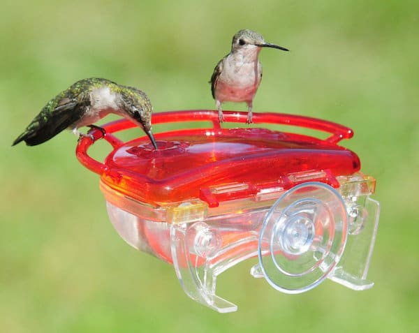 gardening feeders product hummingbird gifts humming feeder painted bird blossoms