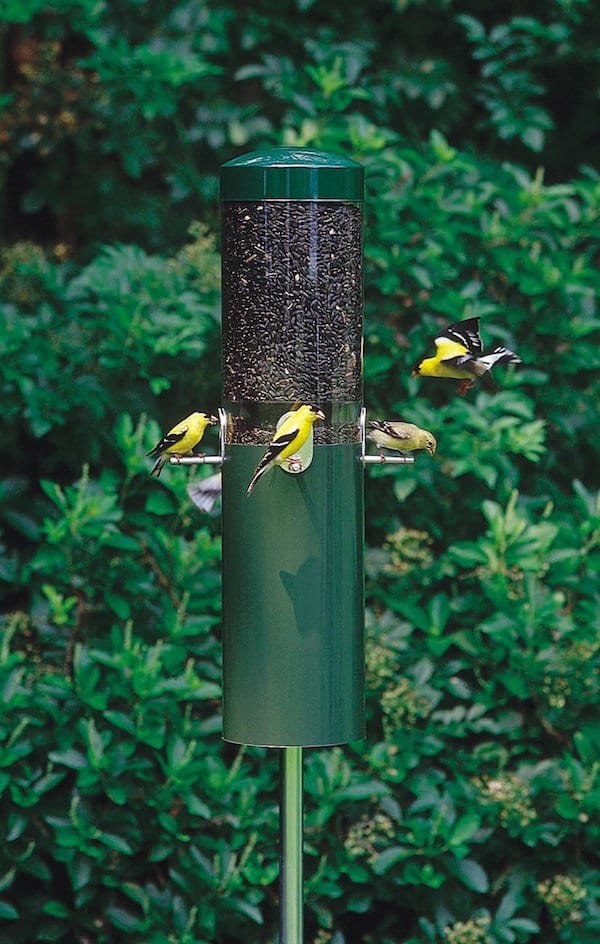 Birds Choice Classic Feeder With Squirrel Baffle And Pole