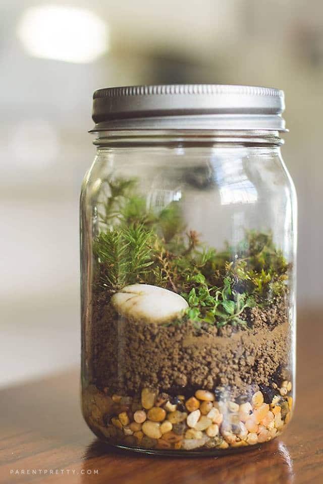 Make A Mason Jar Terrarium Northwest Nature Shop