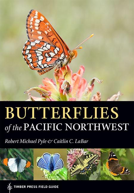 ButterfliesPyle